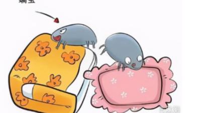 如何除去沙发、床垫上的螨虫